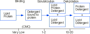 Binding - Solubilization Delipidation